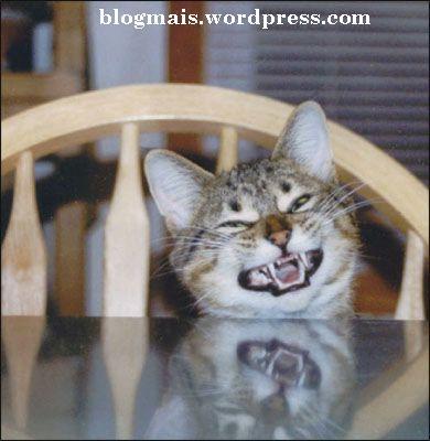 Aaaaaaaaa, ele ta felizinho que agente deu vez aos gatos.