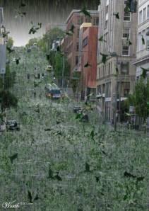 chuva-de-sapo
