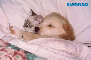 Gatos, gatos, cachorros e porcos! Cute_animals-16