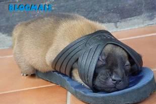 Gatos, gatos, cachorros e porcos! Cute_animals-17