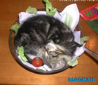 Gatos, gatos, cachorros e porcos! Cute_animals-18