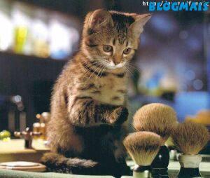 Gatos, gatos, cachorros e porcos! Cute_animals-2