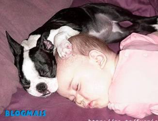 Gatos, gatos, cachorros e porcos! Cute_animals-20