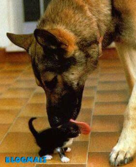 Gatos, gatos, cachorros e porcos! Cute_animals-25