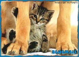 Gatos, gatos, cachorros e porcos! Cute_animals-6