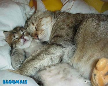 Gatos, gatos, cachorros e porcos! Cute_animals-8