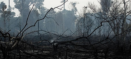 novembro_amazonia_queimada