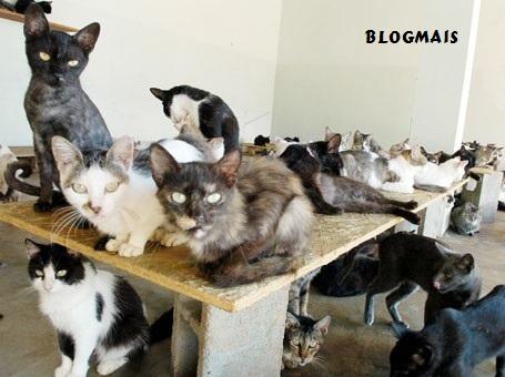 gatos População