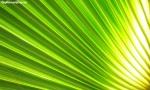 Folha verde e amarela