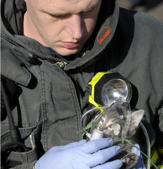 m bombeiro dando de oxigênio  para um Gatinho   Leia mais em: http://naoveja.com/10-fotos-que-voce-tem-que-ver-antes-de-morrer/