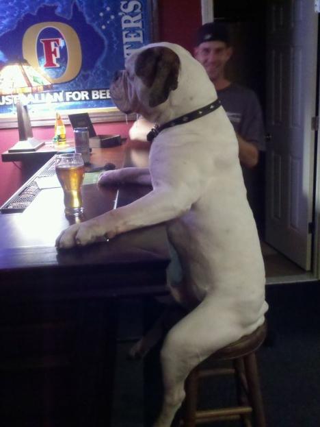 UUm Cão Sentado em um bar