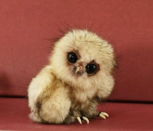 Uma coruja bebê