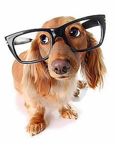 cachorro_inteligente