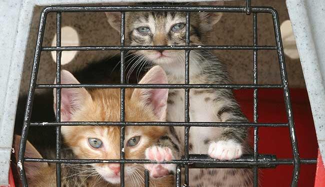 animais-proibição-comercio-pet-shop