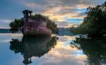 Floresta-flutuante-em-navio-abandonado-1