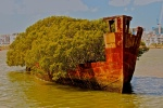Floresta-flutuante-em-navio-abandonado-14